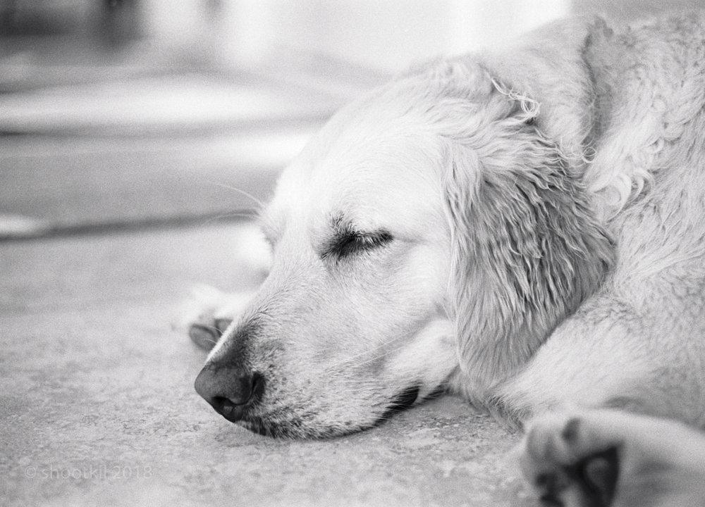 Ripley_Sleeping_2.jpg