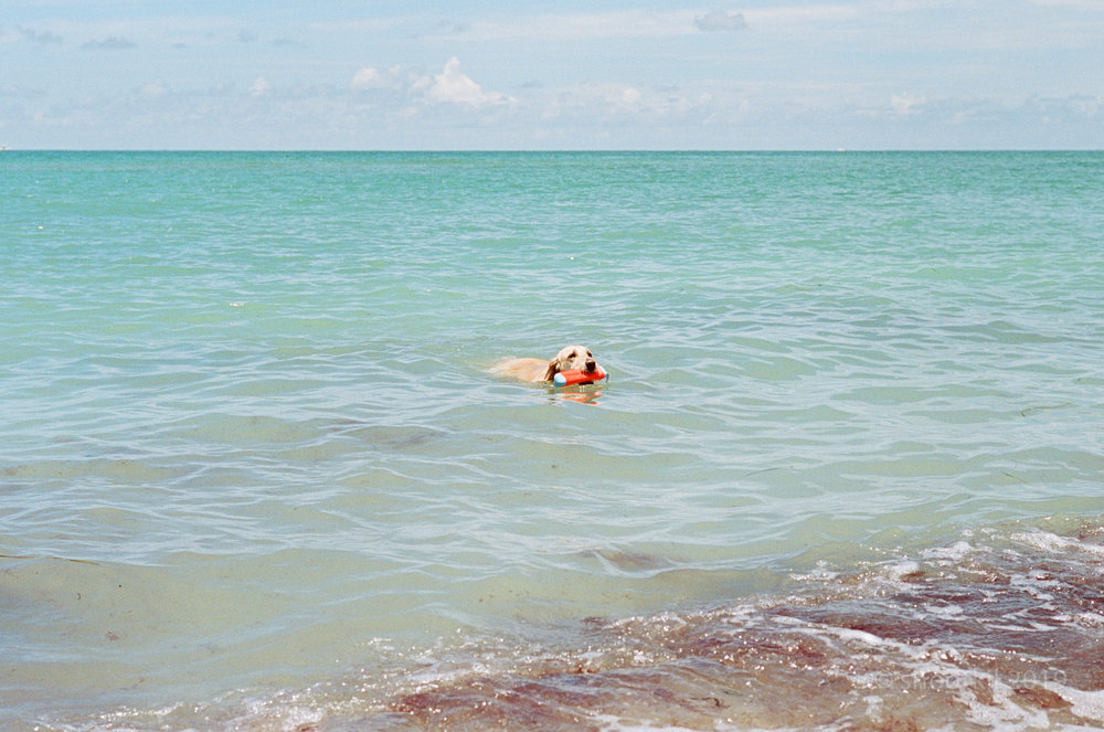 Dog-Beach-Ripley-07272019-24.jpg